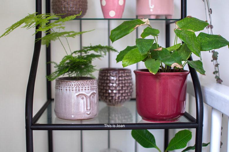 Duurzame plantenpot binnen