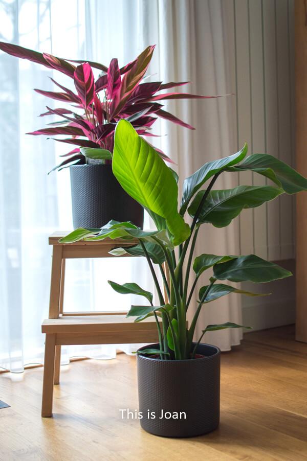 Plantsome